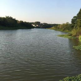 退休村主任变身民间河长:每周4次,每次巡河3公里