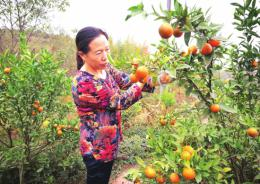 """她从十年前200亩荒山开始流转,如今这位""""湖南好人""""帮扶更多的困难群众"""