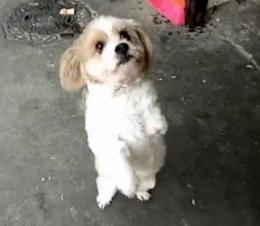 """名字叫过儿!""""狗坚强""""只有三条腿,靠自身魅力成为gai上最靓的狗"""