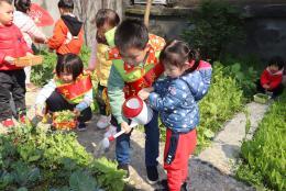 稚嫩双手来植树 幼幼幼儿园学子与小树共成长