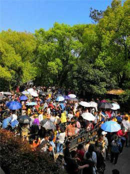 省植物园里人海看花海,岳麓山上众学生祭拜英雄墓