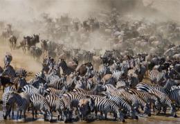 感受非洲大陆的原始之美和蓬勃动力 坦桑尼亚旅游推介会在长沙举行