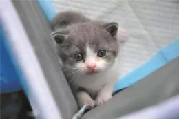 到底是真的克隆貓還是隨便抱了一只?當事公司回應網友疑問