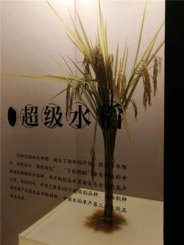 """世界首个大型水稻博物馆月底开馆 空中俯瞰像几颗""""稻粒"""""""
