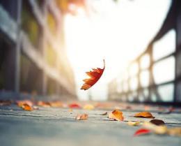 秋季养生防病要符合节气特点