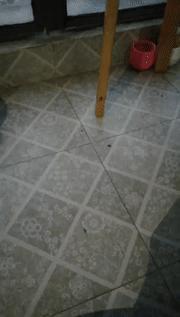長沙一女子家中每天爬出三十條黑色小蟲,殺蟲劑都沒用,原因是有人在天臺這樣……